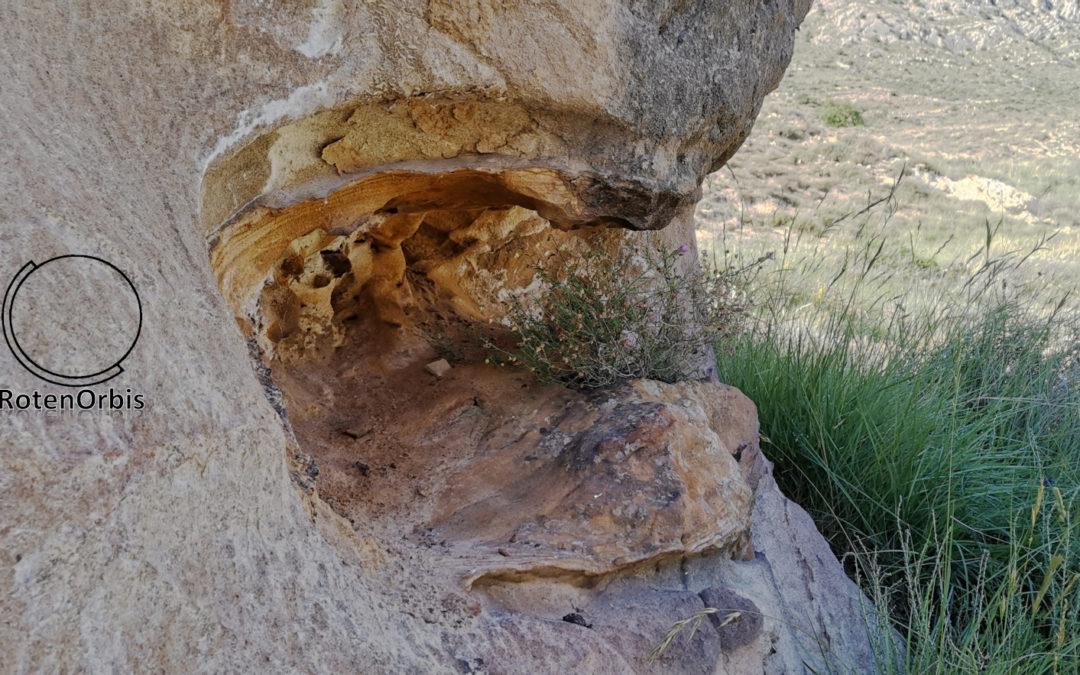 ¿Árbol petrificado en Utrillas (Teruel)?